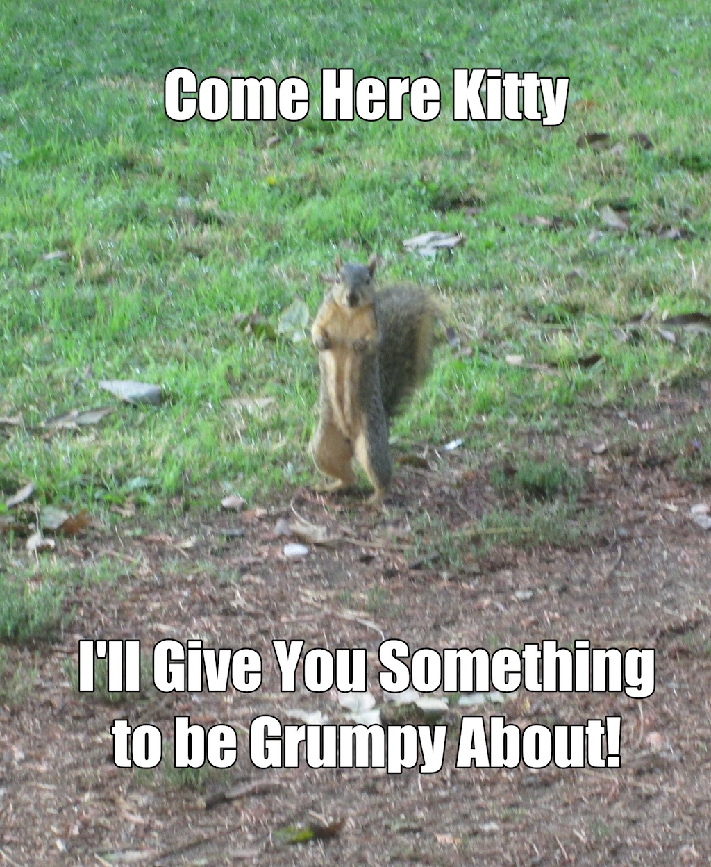 Come here kitty. I'll give you something to be grumpy about!