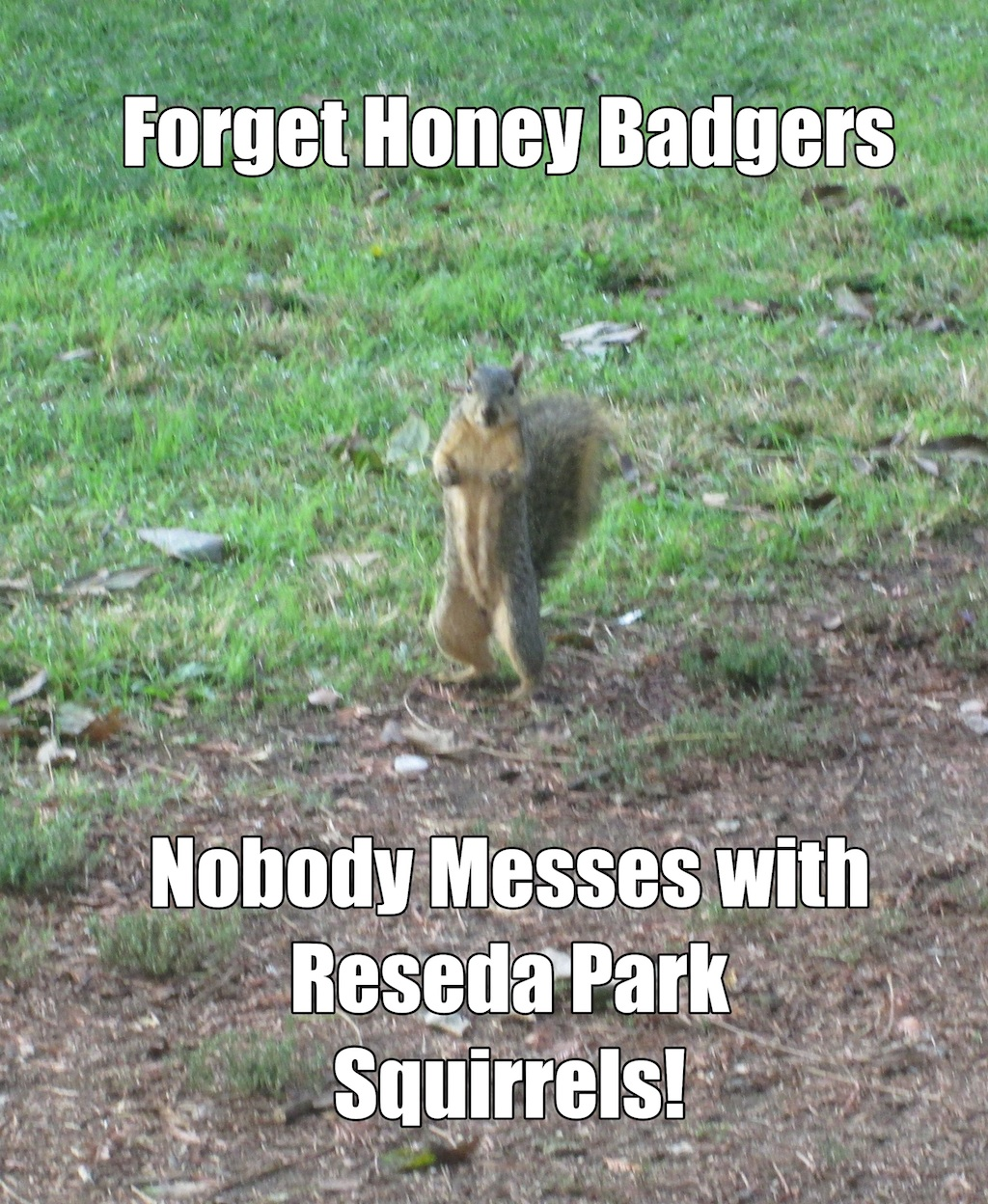 Forget honey badgers, nobody messes with Reseda Park squirrels!