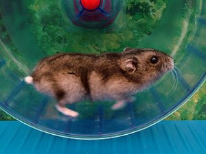 Hamster wheel (from Wikimedia Commons)